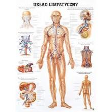 Tablica medyczna ścienna UKŁAD LIMFATYCZNY