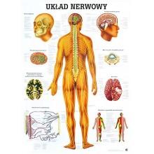 Tablica medyczna ścienna UKŁAD NERWOWY
