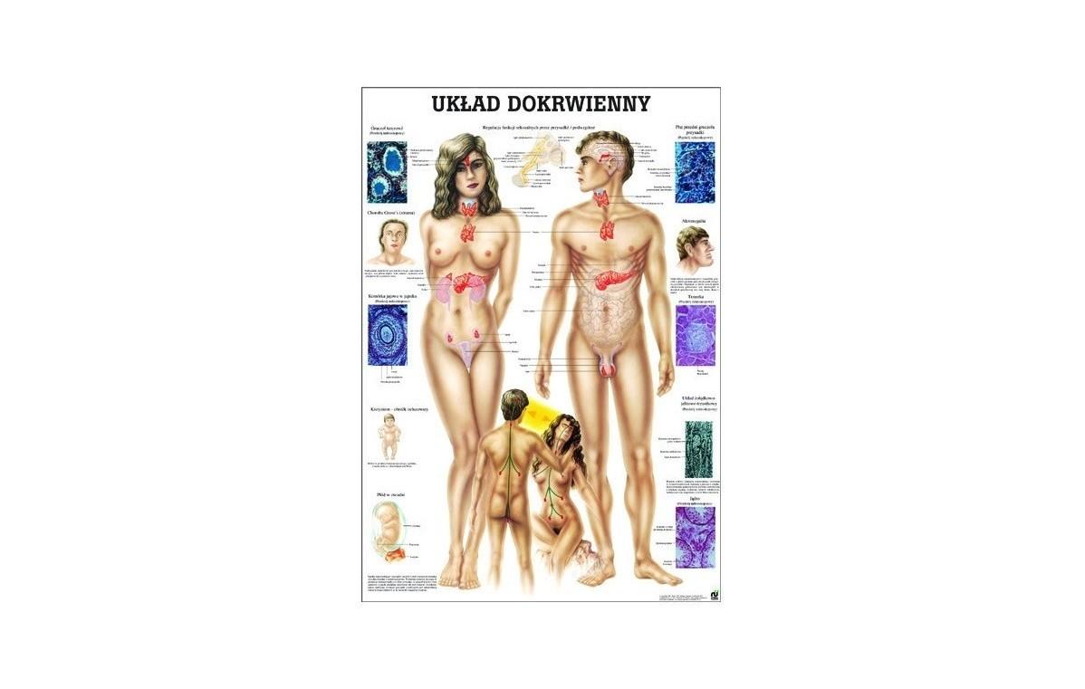 Tablica medyczna ścienna UKŁAD POKARMOWY