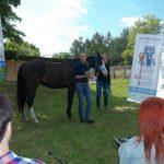 fala uderzeniowa rehabilitacja koni